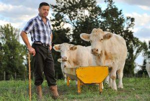 Работник на ферме в Германии